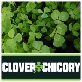 Clover Chicory