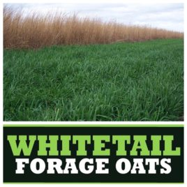 Whitetail Forage Oat Blend 50 LB/1 Acre